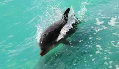 Dolphin-Watch-Boat-Tours-397x230 - pga village