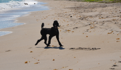 Walton-Rocks-Beach-Dog-Park-Image-397x230 - pga village