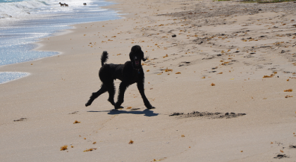 Walton-Rocks-Beach-Dog-Park-Image-420x230 - pga village