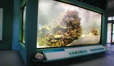 St-Lucie-County-Aquarium-397x230 - pga village